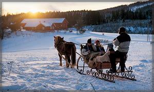 Kanefart og hesteskyss i Maridalen, Oslo.