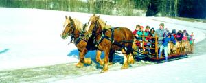 Kanefart og hestekjøring Oslo